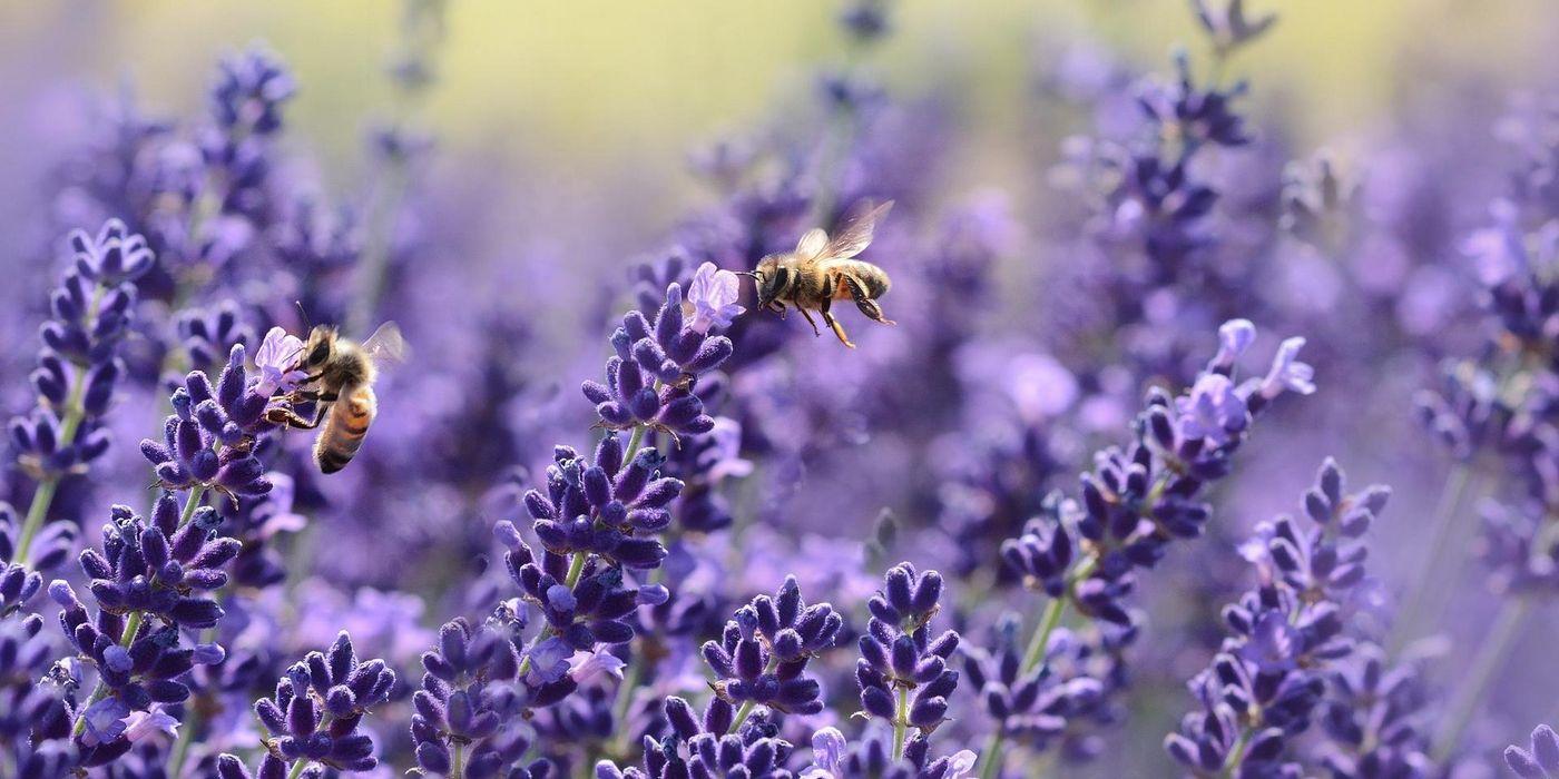 Der Bienentanz